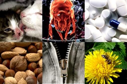 Виды аллергенов их классификация