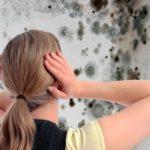 аллергия на плесень, грибок на стене