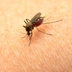 Аллергиянаукусыкомаров