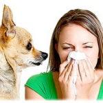 Аллергия на собак: симптомы, лечение, причины возникновения