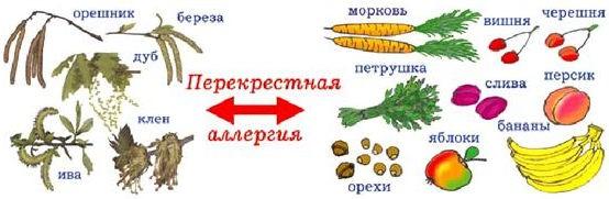 аллергия на орехи - перекрестная аллергия