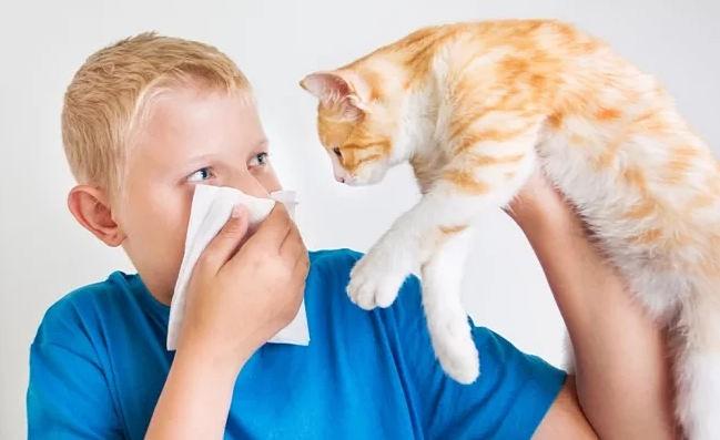 бытовые аллергены, в том числе на кошек