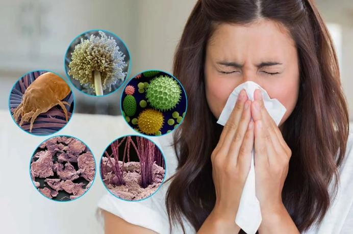 бытовые круглогодичные аллергены