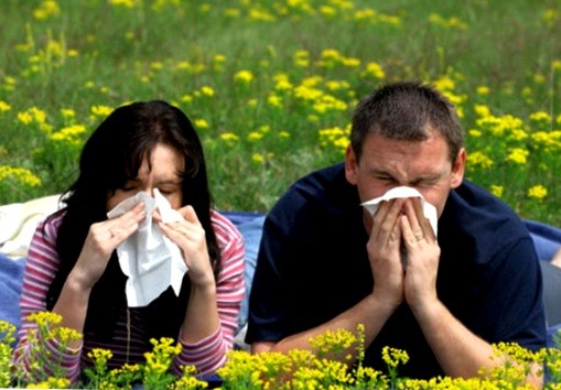 аллергия, посвящение аллергозоны