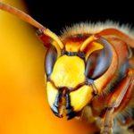 Аллергия на укусы насекомых или иногда и букашка — монстр!