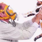 Аллергия на кошек — симптомы, лечение, профилактика