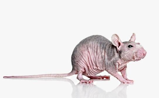 домашнее животное для аллергика