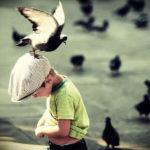 Аллергия на птиц, их перья, экскременты