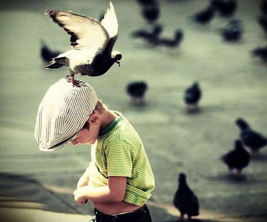 аллергия на птиц