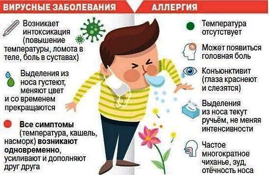 отличие аллергии и простуды