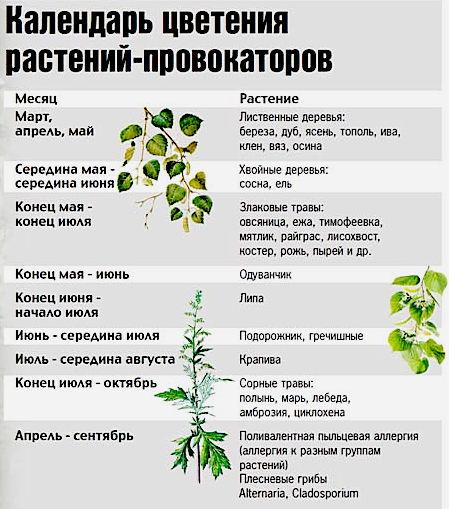 календарь цветения аллергенов при поллинозе