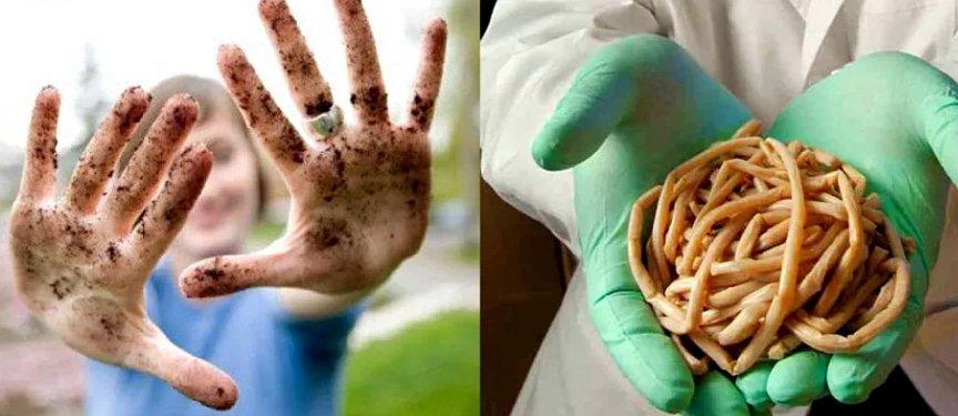 паразиты, вызывающие аллергию