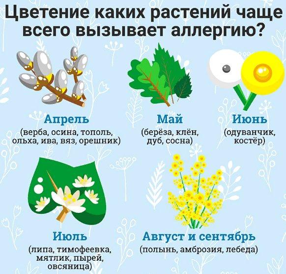 аллергия на пыльцу по месяцам
