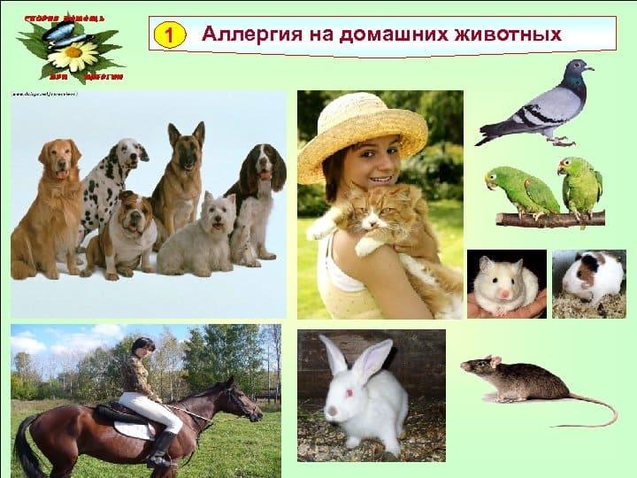симптомы аллергии на животных